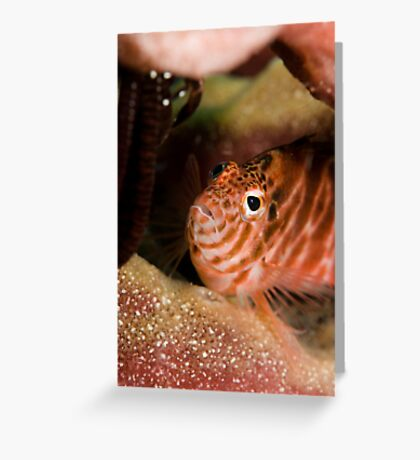 Captivated Greeting Card