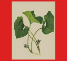 Wild Ginger-Available As Art Prints-Mugs,Cases,Duvets,T Shirts,Stickers,etc One Piece - Short Sleeve