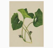 Wild Ginger-Available As Art Prints-Mugs,Cases,Duvets,T Shirts,Stickers,etc Baby Tee