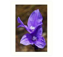 Purple Flag Art Print