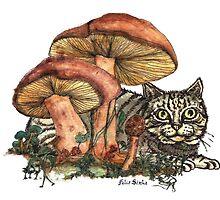 Mushroom and Cat by felissimha