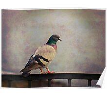 Il piccione Poster