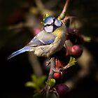 Feathered Jewel by Krys Bailey