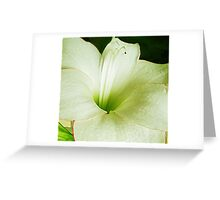 EYELINER LILY Greeting Card
