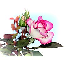 You Are My Rose Photographic Print