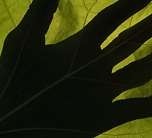 Hand Shadow on Back-lit Catalpa Leaf by Anna Lisa Yoder