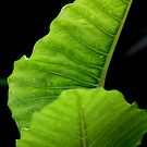 Going Green by Susan van Zyl