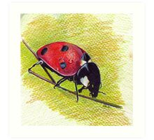 Ladybug - Realistic Art Drawing Art Print