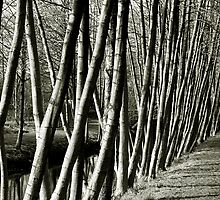 Tree patterns by Brian Reynolds