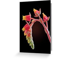 Echeveria flowers Greeting Card