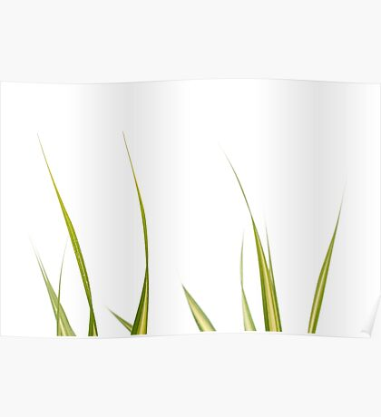 Blades of Grass #1 Poster