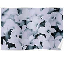 Flowers in BW Poster