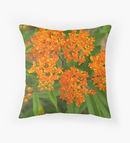 Orange Butterfly Weed from Above Throw Pillow