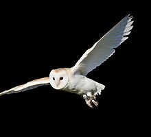 Barn Owl in Flight by SteveHphotos
