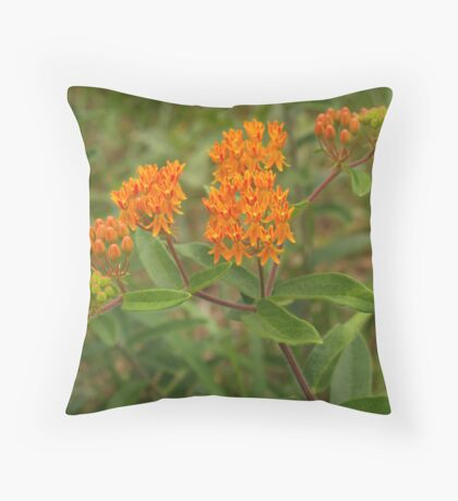 Orange Butterfly Weed in Meadow Throw Pillow