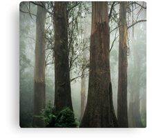 Old Growth Mountain Ash. Canvas Print