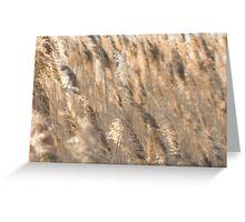 Gold Backlit Reeds Greeting Card