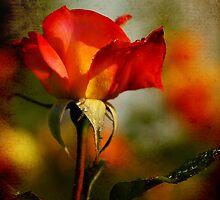 Ageless Beauty by Jonicool