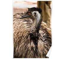 Emu at Healesville Sanctuary   Poster