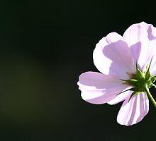Pink flowe by Julie Beitzel