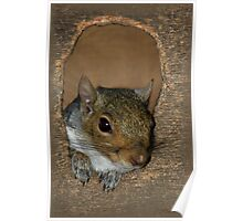 Wazzzup   (Grey Squirrel) Poster