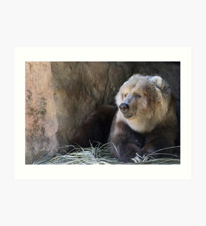Kodiak Bear Art Print