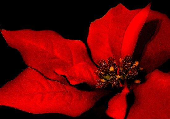 Poinsettia Passion by Renee Dawson
