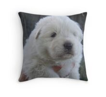 Who could resist... Throw Pillow