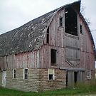 Dang Old Barn by Diane Trummer Sullivan