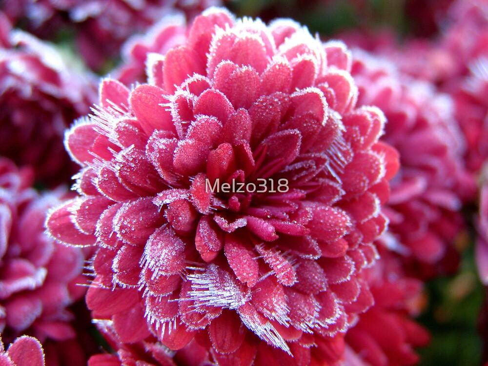 Cranberry Ice by Melzo318