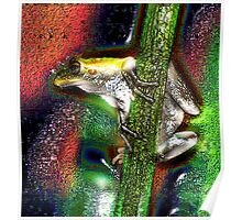 inquisitive frog Poster