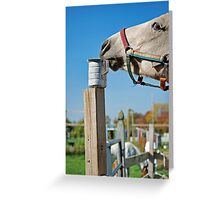 Who Put That There? Greeting Card