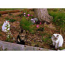 Three Kitties Photographic Print