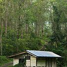 My Jungle Lodge by Steven  Siow