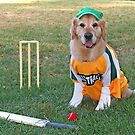 Ready For Cricket by Jenny Brice