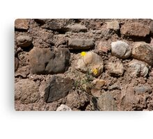 A Slice Of Life..... Canvas Print