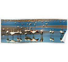 Flamingos, Salar de Uyuni, Bolivia Poster