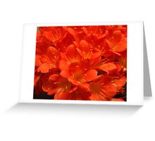 Clivia on Fire Greeting Card