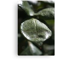 Morning Dew Rose Leaf Canvas Print