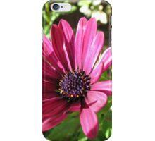 Vibrant Pink Cape Daisy Enjoying Autumn Sunshine iPhone Case/Skin