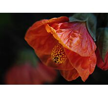 Chinese Lantern Photographic Print
