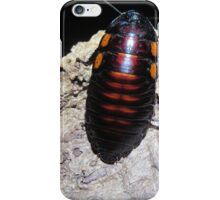 Flat Horn Hisser Roach  iPhone Case/Skin