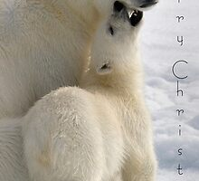 Polar Love - Christmas Card by Steve Bulford