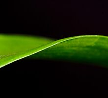 Orchid Leaf.. by Janine  Hewlett