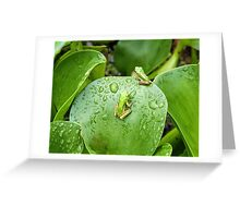 Green Tree Frog #2 Greeting Card