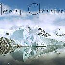 Antarctic Reflections - Christmas Card by Steve Bulford
