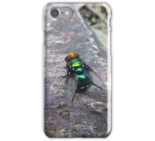 Blow fly iPhone Case/Skin