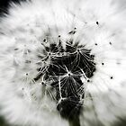 Dream explosion by webgrrl