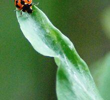 Laby Bug by Joseph Bailouni