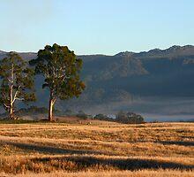 Morning light on Gog Range near Mole Creek, Northern Tasmania by Christine Beswick